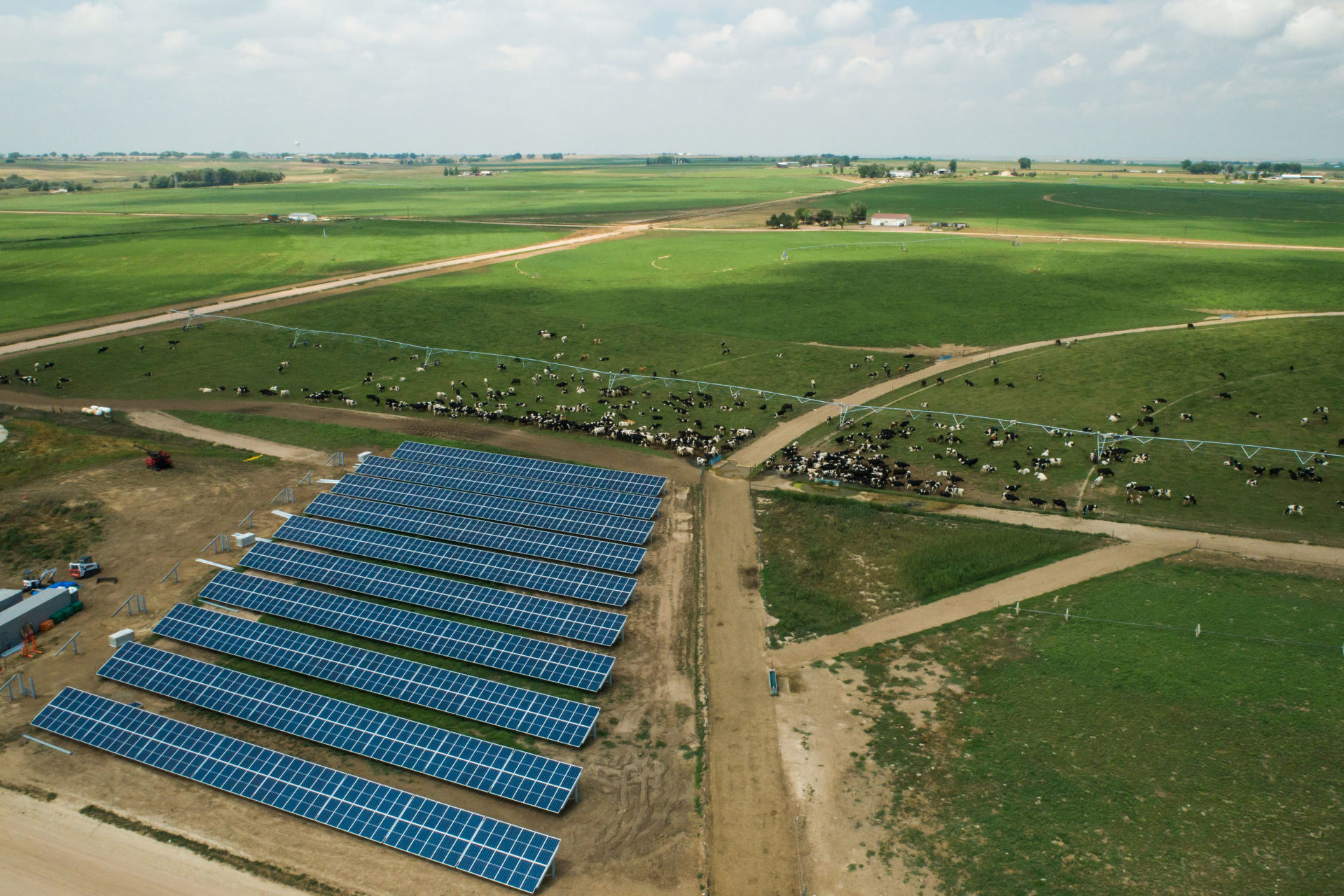 ground-mounted commercial solar array with cows in background at dairy farm